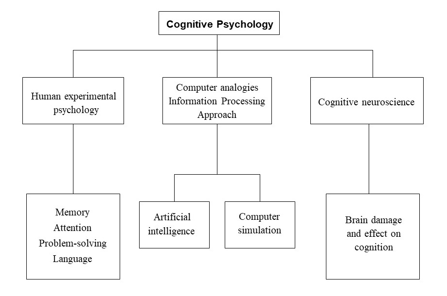 Cognitive Approach  Simply Psychology Cognitive Psychology Subtopics