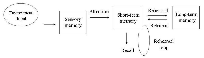 multi store model of memory the This is a diagram of atkinson and shiffrin's multi-store model of memory 1 from the following list, select the appropriate labels for a, b and c write a, b or c in the three.