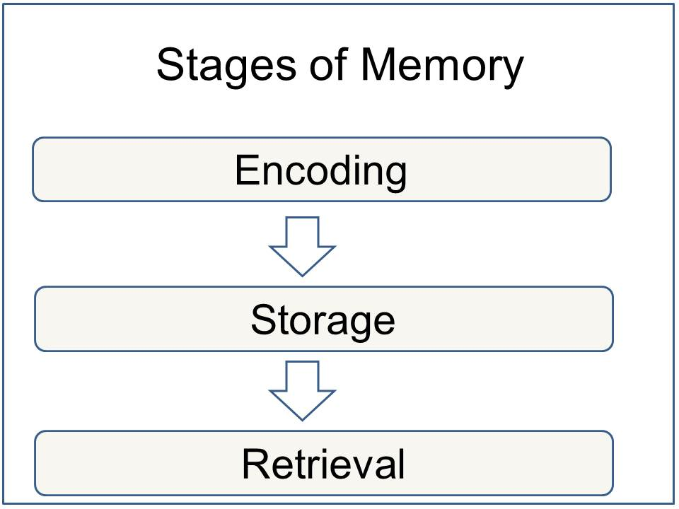 memory encoding storage and retrieval simply psychology stages of memory