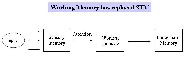 working model of memory essay Baddeley's model of working memory baddeley's model argues that working memory is like a multi-part system, and each system is responsible for a different function.