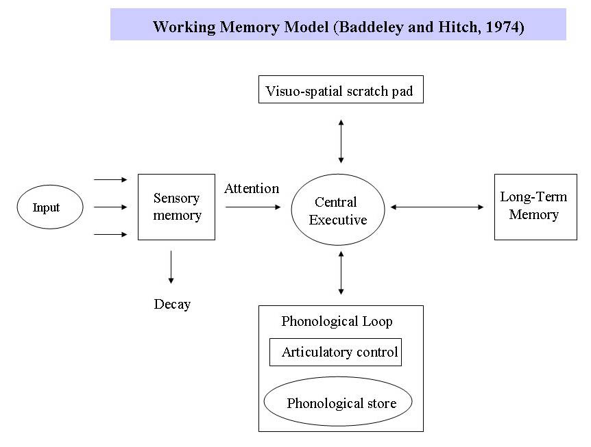 the working memory Working memory is a part of the executive functions (ef), an umbrella term for cognitive processes that regulate, control, and manage other cognitive processes, for.