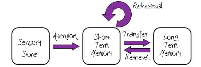 A Level Psychology Memory Revision For Paper 1 Simply Psychology