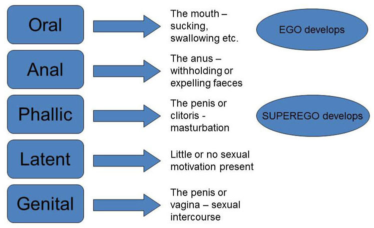 Stages of development according to freud