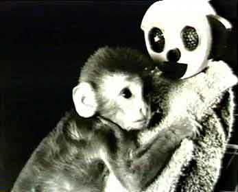 Harlow's Rhesus Monkey Experiments and the Attachment ...