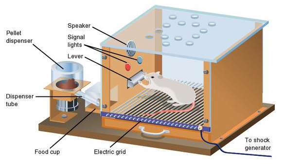 Skinner Box illustration operant conditioning  sc 1 st  Simply Psychology : skinner box diagram - Aboutintivar.Com