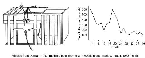 thorndike box